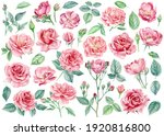 Pink Flowers. Roses  Buds And...