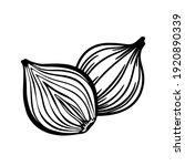 vector sketch of cut in half... | Shutterstock .eps vector #1920890339