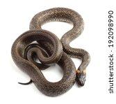 grass snake  natrix natrix ... | Shutterstock . vector #192098990