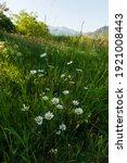 Small photo of Vibrant daisy flowers in natural habitat