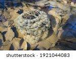 Frog Spawn Underwater. Frog...