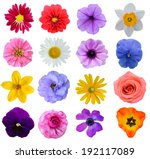 Set of colorful seasonal blooms
