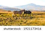 Mountain Horses   Two Beautiful ...