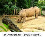 beautiful white rhino ... | Shutterstock . vector #1921440950