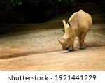 beautiful white rhino ... | Shutterstock . vector #1921441229