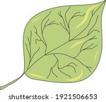poplar leaf. idea for picture... | Shutterstock .eps vector #1921506653