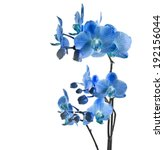 blue orchid isolated on white... | Shutterstock . vector #192156044