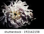 flower design  on black vintage ... | Shutterstock . vector #192162158