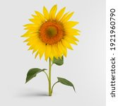 a blossomed sunflower with... | Shutterstock . vector #1921960790