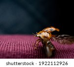A Beautiful Macro Of A Ladybug...