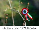 Tricolor rosette on spring tree ...