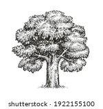 oak sketch. isolated vintage...   Shutterstock .eps vector #1922155100