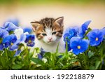 Stock photo adorable kitten in the flowers 192218879
