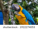 A Macaw Parrot Holds A Piece Of ...