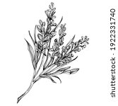 lavender flower. floral... | Shutterstock .eps vector #1922331740