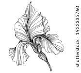 Iris Flower. Floral Botanical...