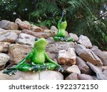 Funny Funny Frogs  Popular...