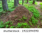 A Large Brown Ant Hill In A...