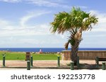 Palm Tree By Waterfront Park I...