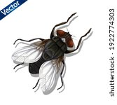 Realistic Insect Fly. 3d Vector ...