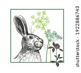 portrait of a hare  twigs of... | Shutterstock .eps vector #1922886743