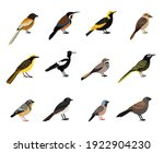 Birds With Beak And Plumage....