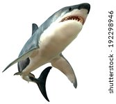 Great White Shark Body   The...
