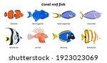 coral reef inhabitants....   Shutterstock .eps vector #1923023069