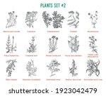 Vector Hand Drawn Plants Set....