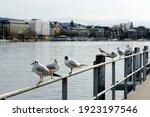 Zurich  Switzerland  01 03 2020 ...