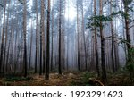 Small photo of Forest mist trees background. Misty forest trees. Forest in mist. Forest mist background
