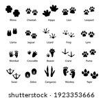 animals and birds feet tracks ... | Shutterstock .eps vector #1923353666