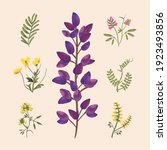 flowers with leaves icon set... | Shutterstock .eps vector #1923493856