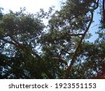 View Of High Branches Of A...