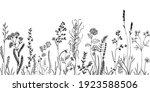 sketch weeds  herbal  flowers... | Shutterstock .eps vector #1923588506