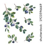 berries and twigs blueberries...   Shutterstock .eps vector #1923596669