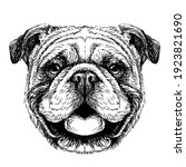 bulldog. black and white ... | Shutterstock .eps vector #1923821690