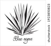 Tequila Agave Black Silhouette. ...