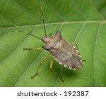 bug on the leaf | Shutterstock . vector #192387