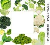 square banner. white  savoy ... | Shutterstock .eps vector #1923875216