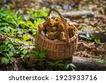 Basket Full Of Wrinkled Thimble ...