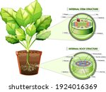 diagram showing stem and root... | Shutterstock .eps vector #1924016369