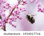 A Bumblebee Flies Determinedly...