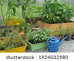 flowers in pots and tomato and...   Shutterstock . vector #1924032980