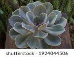 Exotic Succulent Plants....