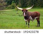 Ankole Watusi Longhorn In Gree...