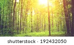 trees in a green forest | Shutterstock . vector #192432050