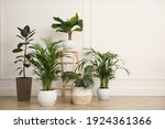 Different beautiful indoor plants in room. House decoration