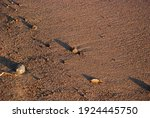 Sand With Small Stones At The...