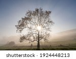 A Lone Tree In The Morning Mist ...